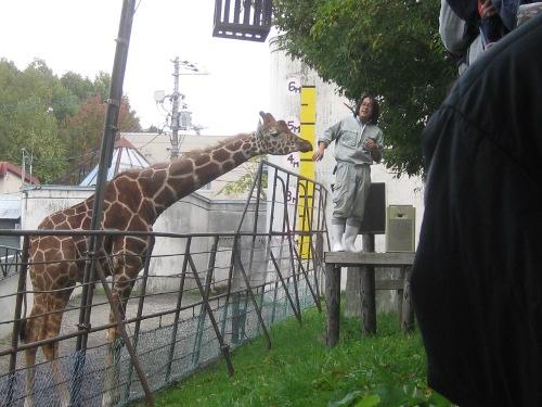 キリン・旭山動物園5