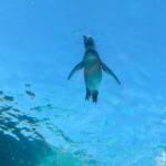 ペンギン旭山動物園7